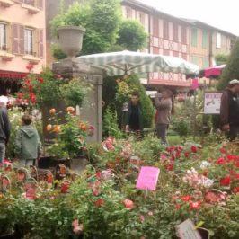 marché fleurs mirepoix ariège pyrénées